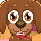 العناية باسنان الكلب اللطيف