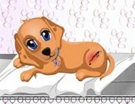 علاج الكلب المصاب