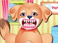 العنايه باسنان الكلب بوبي